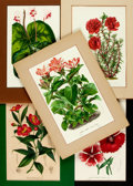 Books:Natural History Books & Prints, Group of Five Color Lithographs of Flowers. Ca. 1880s-1920s. One is heightened with gum arabic. Colorfully matted to various...