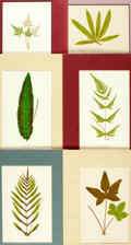 """Books:Natural History Books & Prints, Group of Six Modern Color Prints of Various Plants. Colorfully matted to an overall size of 9.5"""" x 12.75"""". Fine. . ..."""