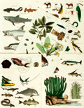 Books:Prints & Leaves, Oliver Goldsmith. Five Hand-Colored Engravings from A History ofthe Earth and Animated Nature. London: R. Edwards, ...