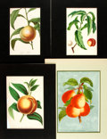 "Books:Natural History Books & Prints, Four Chromolithographs of Fruit. Matted to various sizes; largest is 12"" x 16"". Open tearing to one print. Very good. . ..."