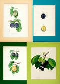"Books:Natural History Books & Prints, Four Hand-Colored Lithographs of Fruit. Ca. 1900. Colorfully matted to an overall size of 11"" x 14"". Some edgewear to mats. ..."