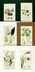 """Books:Natural History Books & Prints, Group of Six Hand-Colored Engravings of Plants. Colorfully matted to various sizes; largest measures 10.25"""" x 13.5"""". Fine. ..."""