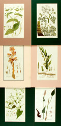 "Books:Natural History Books & Prints, Group of Six Hand-Colored Engravings of Plants. Colorfully matted to various sizes; largest measures 10.25"" x 13.5"". Fine. ..."