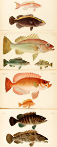 Books:Natural History Books & Prints, [Japanese Marine Life]. Philipp F. Von Siebold and Wilhem de Haan. Four Facsimile Plates from Fauna Japonica. [T...