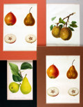 """Books:Prints & Leaves, [Fruit]. Group of Four Color Engravings of Fruit. Uniformly andcolorfully matted to an overall size of 11"""" x 13.75"""". Very g..."""