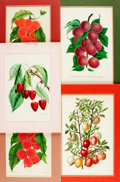 """Books:Prints & Leaves, [Fruit]. Group of Five Chromolithographs Depicting Fruit. Ca. 1888.Colorfully matted to various sizes; largest measures 12""""..."""