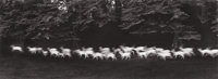 PAUL CAPONIGRO (American, b. 1932) Running White Deer, 1967 Gelatin silver, printed later 7 x 19