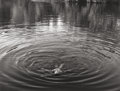 Photographs:Gelatin Silver, Lewis Koch (American, b. 1949). Into the Heart of Darkness and Light; A Dream Sequence, 1993. Gelatin silver. 14-1/8 x 1...