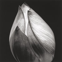 YASUHIRO ISHIMOTO (Japanese-American, 1921-2012) Untitled (Closed Plant Bloom), circa 1985 Gelatin s
