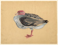 MORRIS GRAVES (American, 1910-2001) Bird, No. 845, 1939 Gouache on paper 12-1/2 x 16-1/8 inches (