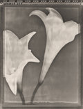 Photographs:Gelatin Silver, Tom Baril (American, b. 1952). Lilies, 1995. Gelatin silver. 23-1/2 x 17-3/4 inches (59.7 x 45.1 cm). Signed and dated m...