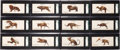 "Non-Sport Cards:Sets, 1920s E258 Pennsylvania Chocolate Co. ""Zoo Cards"" Complete Set(12). ..."