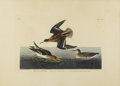 Prints:American, JOHN JAMES AUDUBON (American 1785-1851). HyperboleanPhalarope. Hand-colored etching. 25in. x 37.5in.. Plate CCXV,No. 4...