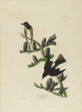 Prints:American, JOHN JAMES AUDUBON (American 1785-1851). Olive SidedFlycatcher. Hand colored etching. 38in. x 25in.. Plate CLXXIV,No. ...