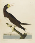 Prints:American, JOHN JAMES AUDUBON (American 1785-1851). Booby Gannet. Handcolored etching. 38in. x 25in.. Plate CCVII, No. 42, Robert ...