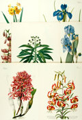 Books:Prints & Leaves, [Trew, Redoute, Bateman]. Group of Seven Modern Reprints afterFloral Works by C.J. Trew, P.J. Redoute, and J. Bateman. ...