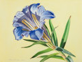Fine Art - Work on Paper:Watercolor, RORY MCEWEN (British, 1932-1982). J. Big Gentian, 1982.Watercolor on paper. 25-1/2 x 34-1/4 inches (64.8 x 87.0 cm). Si...