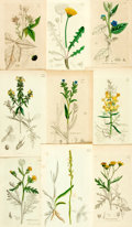 Books:Prints & Leaves, [Botanical Illustrations]. Group of 123 Original Hand-ColoredEngravings of Flowering Plants. Various publishers and dates. ...