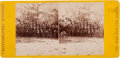 Photography:CDVs, Union General George McClellan and Staff Stereoview....