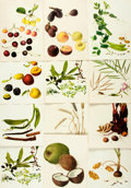 Books:Prints & Leaves, [Botanical Illustrations]. Group of Fifty-Seven Color PrintsDepicting Various Types of Edible Plants. [N.p., n.d.]. ...