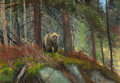 Fine Art - Painting, American:Contemporary   (1950 to present)  , MICHAEL COLEMAN (American, b. 1946). Brown Bear. Oil onMasonite. 14 x 20 inches (35.6 x 50.8 cm). Signed lower right: ...