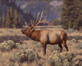 Fine Art - Painting, American:Contemporary   (1950 to present)  , TUCKER SMITH (American, b. 1940). Bugling Elk, 2006. Oil oncanvas. 16 x 20 inches (40.6 x 50.8 cm). Signed and dated lo...