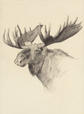 Fine Art - Work on Paper:Drawing, FRANK TENNEY JOHNSON (American, 1874-1939). Moose Head,1903. Pencil on paper. 13-3/4 x 9-3/4 inches (34.9 x 24.8 cm) (s...