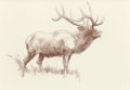 Western:Modern, BOB KUHN (American, 1920-2007). Study of Elk. Conté crayonon paper. 10-1/2 x 14 inches (26.7 x 35.6 cm) (sheet). Signed...