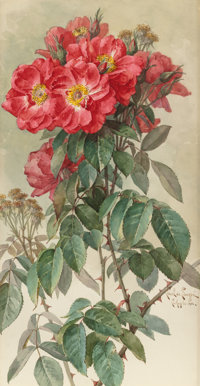 PAUL DE LONGPRÉ (French/American, 1855-1911) Branches of Ragged Robin Roses, 1903 Watercolor and pen