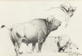 Fine Art - Work on Paper:Drawing, WILHELM KUHNERT (German, 1865-1926). Cape Buffalo, 1916.Pencil on paper. 9-3/4 x 14-1/4 inches (24.8 x 36.2 cm) (sight)...