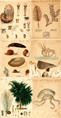 Books:Natural History Books & Prints, [Scientific Illustration]. Group of Twenty-Nine Original Hand-Colored Engravings Depicting Various Plant and Animal Types. [...