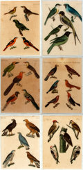 Books:Natural History Books & Prints, [Botanical Illustration]. Group of Six Original Hand-Colored Engravings Depicting Various Types of Birds. [N.p., n.d.]. ...
