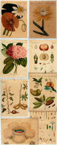 Books:Natural History Books & Prints, [Botanical Illustration]. Group of Seven Original Hand-Colored Engravings Depicting Various Types of Plants. [N.p., n.d.]....