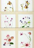 Books:Natural History Books & Prints, [Botanical Illustration]. Group of Six Chromolithographic Prints Depicting Various Types of Flowers. [N.p., n.d.]. ...