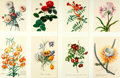 Books:Natural History Books & Prints, [Georg Dionysius Ehret]. Group of Eight Reproduction Prints Depicting Various Flowers, after works by Ehret. [N.p., n.d.]. ...