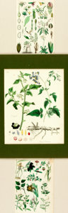 Books:Natural History Books & Prints, [Botanical Illustration]. Group of Three Original Hand-Colored Engravings Depicting Various Plant Types. [N.p., n.d.]. ...