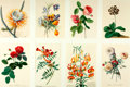 Books:Prints & Leaves, [Georg Dionysius Ehret]. Group of Eight Modern Reprints of Flowers after Works by Ehret. ... (Total: 8 Items)