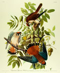 Books:Prints & Leaves, [Audubon]. Large Reproduction Print Depicting the American SparrowHawk, After an Original Design by John James Audubon. [N....