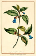 Books:Prints & Leaves, [Botanical Illustrations.] Hand-Colored Lithograph of a FloweringPlant. P. Miller, 1757....