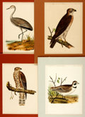 Books:Prints & Leaves, [Birds]. Group of Four Hand-Colored Prints Depicting Various BirdSpecies. United States Pacific Rail Road Expedition and Su...