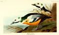 Books:Natural History Books & Prints, [Audubon]. Large Reproduction Print Depicting the Western Duck, from Birds of America: A Selection of Plates Facsimile...