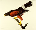 Books:Natural History Books & Prints, [Audubon]. Large Reproduction Print Depicting the Louisiana Hawk, from Birds of America: A Selection of Plates Facsimile...