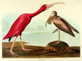 Books:Natural History Books & Prints, [Audubon]. Large Reproduction Print Depicting the Scarlet Ibis, from Birds of America: A Selection of Plates Facsimile...