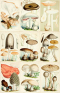 Books:Prints & Leaves, [Mushrooms]. [Fungi]. Group of 224 Color Plates Depicting VariousTypes of Mushrooms and Fungi. Various publishers, circa 18...