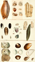 Books:Prints & Leaves, [Shells]. Group of 246 Color Plates Depicting Various Shell Types.Various publishers, circa 1860. ...