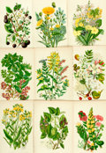 Books:Prints & Leaves, [Botanical Illustrations.] Large Lot of 144 Color Prints of VariousFlowering Plants. [N.p., n.d.]...