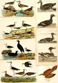 Books:Prints & Leaves, [Birds.] Large Lot of Sixty-Seven Illustrated Plates DepictingBird-Life. [N.p., n.d.] Color plates and black and white engr...