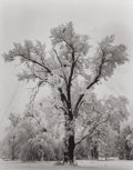 Photographs, ANSEL ADAMS (American, 1902-1984). Oak Tree, Snowstorm, Yosemite Valley, 1948. Gelatin silver, circa 1960. 9-1/2 x 7-1/2...