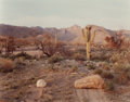 Photographs:Dye-transfer, JOEL STERNFELD (American, b. 1944). Cactus, Tucson, Arizona, April 1979. Chromogenic, printed May 1982. 13-1/2 x 17-1/8 ...