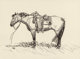 ROBERT E. LOUGHEED (American, 1910-1982) Lone Horse Charcoal on paper 10 x 13-1/2 inches (25.4 x 34.3 cm) (sight) Si